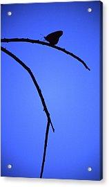Natures Elegance Acrylic Print