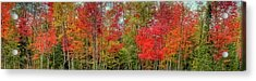 Acrylic Print featuring the photograph Natures Fall Palette by David Patterson
