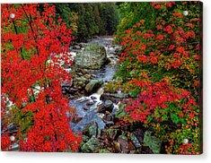 Natures Frame Acrylic Print