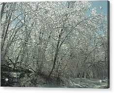 Acrylic Print featuring the photograph Nature's Frosting by Ellen Levinson