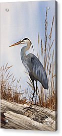 Nature's Gentle Beauty Acrylic Print by James Williamson