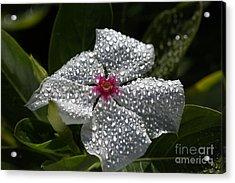 Natures Glitter Acrylic Print