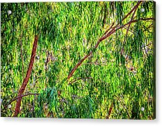 Acrylic Print featuring the photograph Natures Greens, Yanchep National Park by Dave Catley