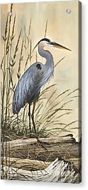 Nature's Harmony Acrylic Print by James Williamson