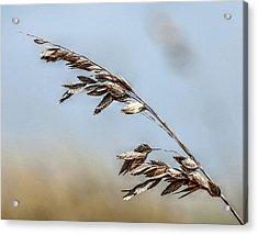 Nature's Hummingbird Acrylic Print