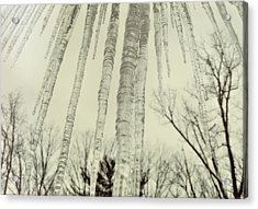 Nature's Ice Pop Acrylic Print by JAMART Photography
