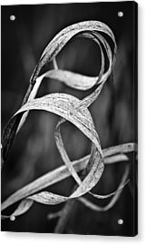 Natures Knot Acrylic Print by Monte Stevens
