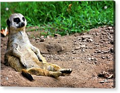 Natures Lazy Boy Acrylic Print by Lana Trussell