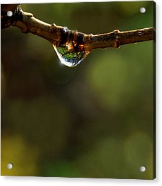 Natures Light Acrylic Print by Marilynne Bull
