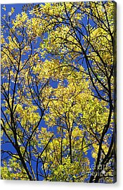 Natures Magic - Original Acrylic Print