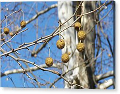 Nature's Ornaments Acrylic Print by JAMART Photography