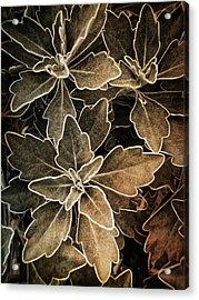 Natures Patterns Acrylic Print