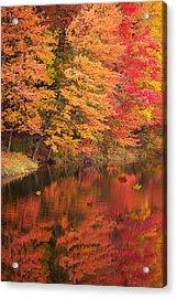 Natures Peace Acrylic Print