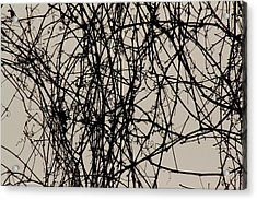Nature's Pen And Ink 2 Acrylic Print by Susie DeZarn