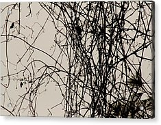 Nature's Pen And Ink Acrylic Print by Susie DeZarn