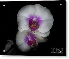 Natures Perfection Acrylic Print by Judy Hall-Folde