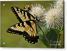 Natures Pin Cushion Acrylic Print