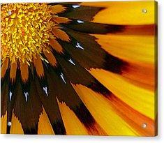 Nature's Pinwheel Acrylic Print
