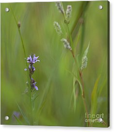 Natures Poetry... Acrylic Print by Nina Stavlund