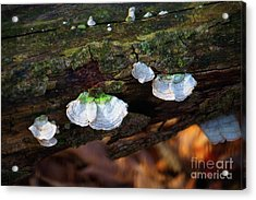 Acrylic Print featuring the photograph Natures Ruffles - Cascade Wi by Mary Machare