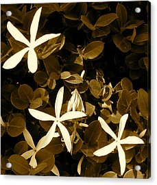 Nature's Stars Acrylic Print by Ashley Butler