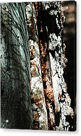 Natures Textures  Acrylic Print by Brigid Nelson