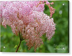 Natures Untouched Beauty Acrylic Print