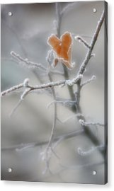 Acrylic Print featuring the photograph Nature's Valentine by Diane Alexander