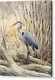 Nature's Wonder Acrylic Print by James Williamson