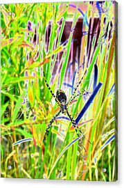 Nature's X Acrylic Print by Peter  McIntosh