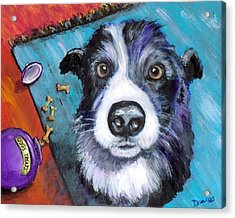 Naughty Border Collie Acrylic Print by Dottie Dracos