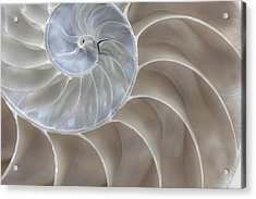 Acrylic Print featuring the photograph Nautilus Shell II by John Hix