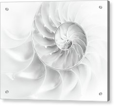 Nautilus Shell In High Key Acrylic Print by Tom Mc Nemar