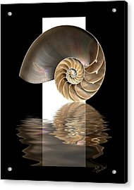 Nautilus Shell Acrylic Print by Judi Quelland