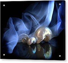 Nautilus Trio Acrylic Print by Linda Olsen