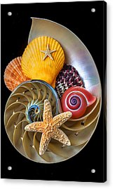 Nautilus With Sea Shells Acrylic Print by Garry Gay