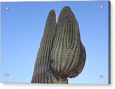 Wickenburg Saguaro  Acrylic Print