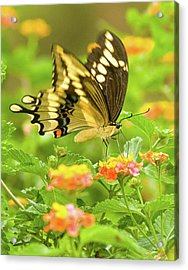 Nectar Collection Acrylic Print