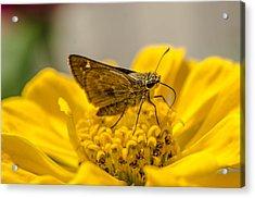 Nectar Delight Acrylic Print