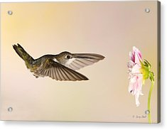 Acrylic Print featuring the photograph Nectar Seeking Missile by Gerry Sibell