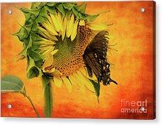 Nectar Time Acrylic Print by Geraldine DeBoer