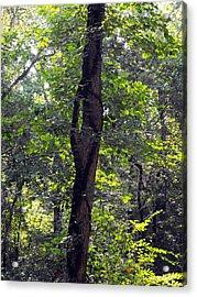 Needle Hook Tree Acrylic Print by Eva Thomas
