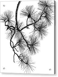 Needles II Acrylic Print
