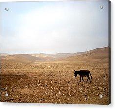 Negev Donkey Acrylic Print by Rachel Figueroa