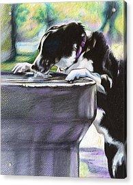 Nellie Acrylic Print by Carol Meckling