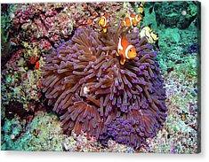 Nemo's Home Acrylic Print