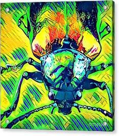 Neon Beetle Acrylic Print by Amy Cicconi
