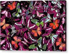 Neon Butterflies Acrylic Print by JQ Licensing