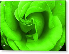 Neon Green Rose Acrylic Print by Robyn Stacey
