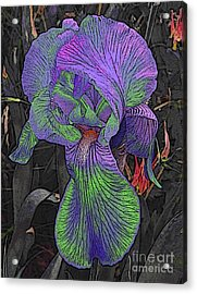 Neon Iris Dark Background Acrylic Print